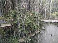 Bird Park in Kuala Lumpur (Malaysia) (34).jpg