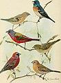 Bird lore (1911) (14752919714).jpg