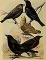Bird lore (1920) (14775385343).jpg