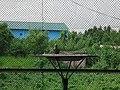 Bird park at Bangabandhu Sheikh Mujib Safari Park - Parrots.jpg