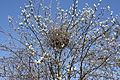 Birds nest, Belfast, April 2010 (01).JPG