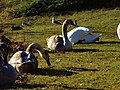 Birds of Großer Garten, Dresden (910).jpg