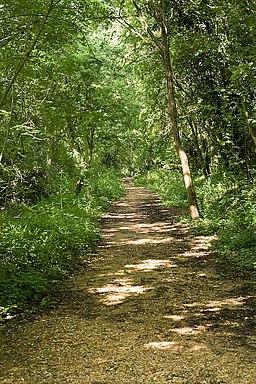 Bishop's Waltham Railway Path - geograph.org.uk - 842748