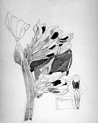 Charles Rennie Mackintosh: Black Bean, Walberswick