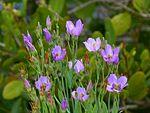 Black Point Wildlife Drive, Merritt Island FL - Flickr - Rusty Clark (212).jpg
