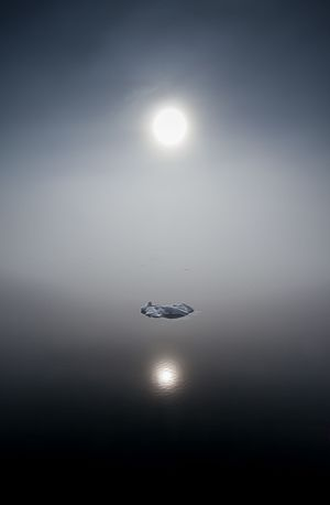 The poetry of arctic sun, fog, sea, and ice