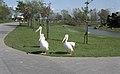 Blackpool Zoo, Blackpool - panoramio (1).jpg
