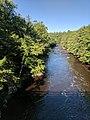 Blackwater Falls State Park WV 18.jpg