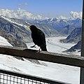 Blick auf den Aletschgletscher.jpg