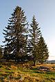 Blochriegel, Bäume am Abend2.jpg