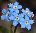 Blue flower3.jpg
