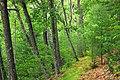Bob Webber Trail (10) (14413206209).jpg