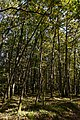 Bois de la Brandelle 2017-10 n02.jpg