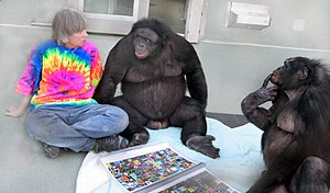 "Bonobo - Bonobos Kanzi (C) and Panbanisha (R) with Sue Savage-Rumbaugh and the outdoor symbols ""keyboard"""