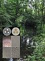Bos van Bosman foto.jpg