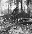 Bosbewerking, arbeiders, boomstammen, gereedschappen, Bestanddeelnr 253-5994.jpg
