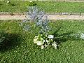 BotanicGardensPisa (129).JPG