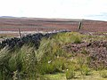 Boundary wall, Lofthouse Moor - geograph.org.uk - 1432868.jpg