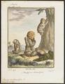 Bradypus tridactylus - 1700-1880 - Print - Iconographia Zoologica - Special Collections University of Amsterdam - UBA01 IZ21000161.tif