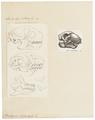 Bradypus tridactylus - 1700-1880 - Print - Iconographia Zoologica - Special Collections University of Amsterdam - UBA01 IZ21000169.tif