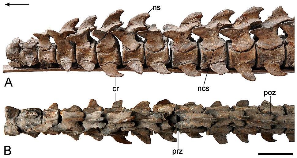 Brancasaurus-15