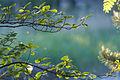 Branches 4636.jpg