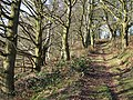 Bridleway up Abbot's Castle Hill, Shropshire - geograph.org.uk - 693599.jpg