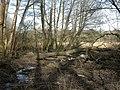 Buckland, drain - geograph.org.uk - 1735886.jpg