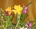 Budapest Orchid Exhibition 2006 10.JPG