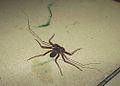 Bug-4-web-LR-8717.jpg