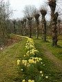 Burford churchyard springtime - geograph.org.uk - 411804.jpg