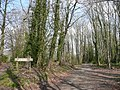 Burrs Wood - geograph.org.uk - 807610.jpg