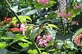 Butterfly Rainforest FMNH 50.jpg