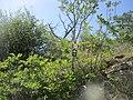 CAI 687 Rocca San Michele Segnavia.jpg