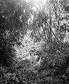 COLLECTIE TROPENMUSEUM De vrouw van Dr. R.A.M. Bergman tijdens een wandeling door een bamboebos TMnr 10027196.jpg