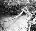 COLLECTIE TROPENMUSEUM Een hangbrug over de rivier Moesi in het gedeelte tussen Kepahiang en Talangpadang in Zuid-Sumatra TMnr 10007592.jpg