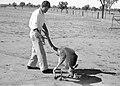 CSIRO ScienceImage 6885 Alan Newsome with kangaroo.jpg