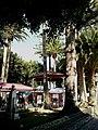Canaries Tenerife Icod Los Vinos Plaza Buste - panoramio.jpg
