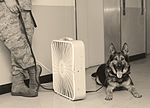 Canine teams hound victory at Top Dog competition 160516-F-RA202-197.jpg