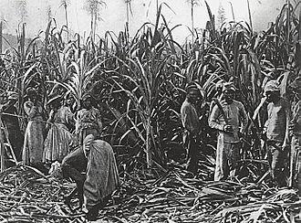 Irrigation management - Labor in a sugarcane plantation