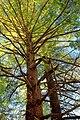 Canopy (8419349104).jpg