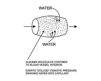 Interstitial fluid - Image: Capillary 3
