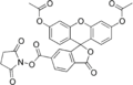 Carboxyfluorescein diacetate succinimidyl ester.png