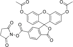 Carboxyfluorescein diacetate succinimidyl ester - Image: Carboxyfluorescein diacetate succinimidyl ester