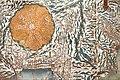 Carte du Mont Fuji (Musée national des arts asiatiques - Guimet, Paris) (42221850960).jpg