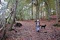 Castlehead Wood, Keswick - geograph.org.uk - 1027766.jpg