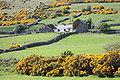 Castlewellan countryside, May 2010 (13).JPG