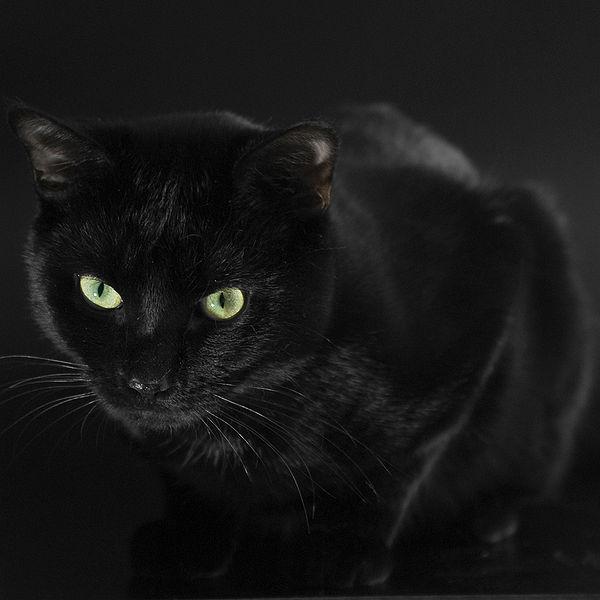 Ficha de Wizard 600px-Cat---Black---Moertel---%28Gentry%29