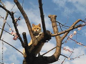 English: A cat on the tree. Italiano: Gatto su...