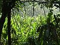 Cataratas del Iguazú - panoramio (10).jpg